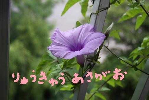 001_R_20100701212301.jpg