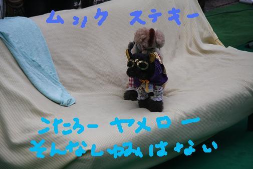 009_R_20100925224013.jpg
