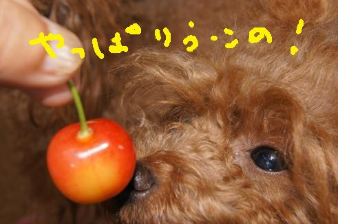 011_R_20110702030437.jpg