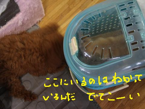 028_R_20100621234914.jpg