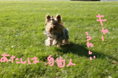 042_R_20110719000104.jpg