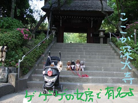 052_R_20100615155733.jpg
