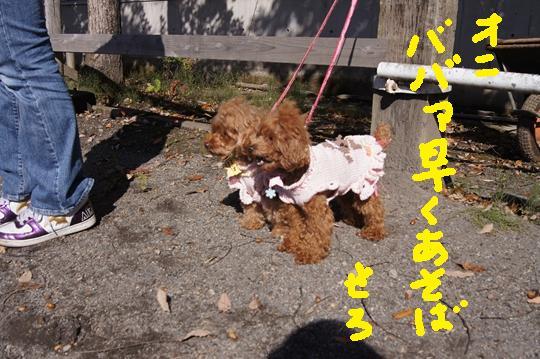 053_R_20111025113621.jpg