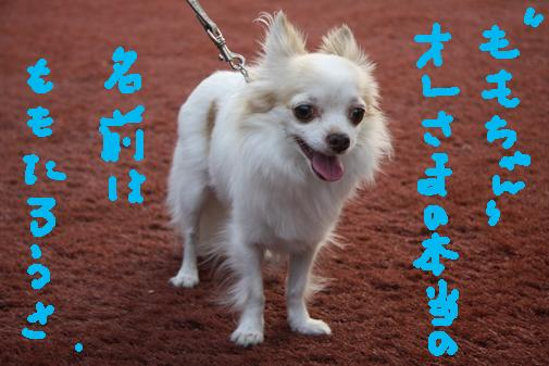 055_R_20100915213633.jpg