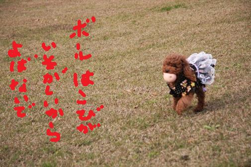 059_R_20101112123427.jpg