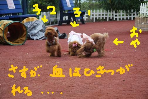 060_R_20100915213629.jpg