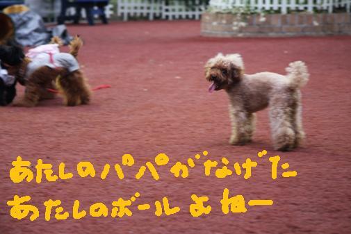 063_R_20100915213904.jpg