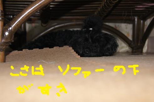 066_R_20110712081442.jpg
