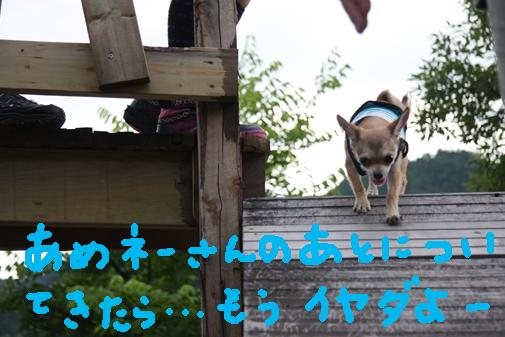 079_R_20100714010308.jpg