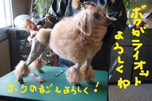 088_R_20101128103236.jpg