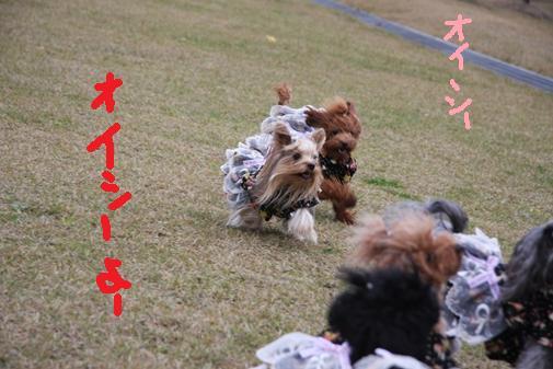 091_R_20101112123943.jpg