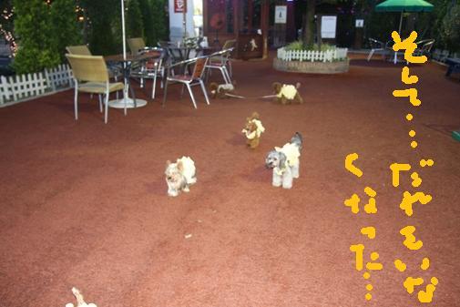 106_R_20100819112600.jpg