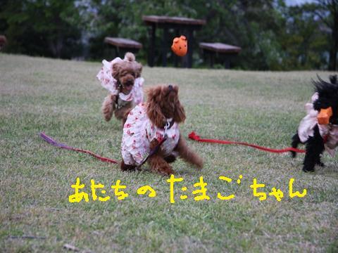 135_R_20100513234702.jpg