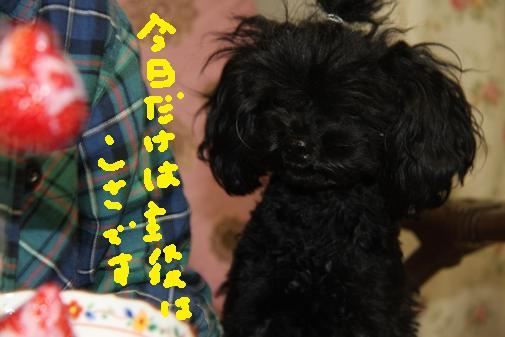 182_R_20110112123611.jpg