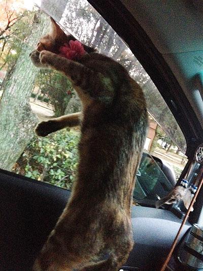 車窓から。。