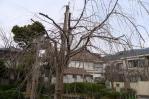 20110306桜守公園