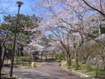 R20110407 須磨浦公園さくら4