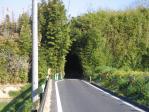 20110418松陰への道と竹林