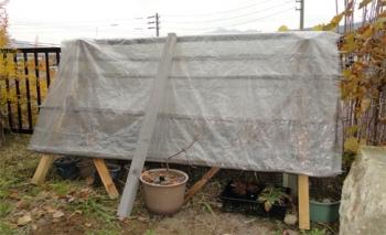 2013 鉢植えズの雪囲い 完成