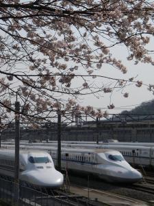 新幹線桜 008