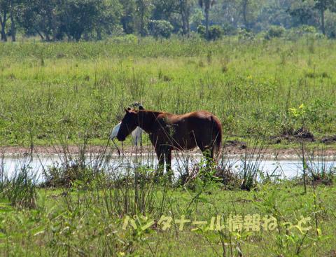 Cavalo e Tuiuiu