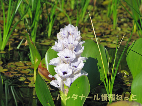 Flower on the river