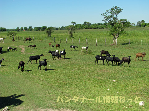 農場の家畜たち