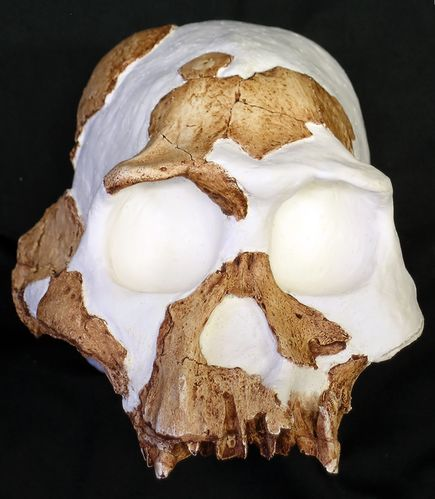 new-homo-gautengensis-human-ancestor_20941_big.jpg