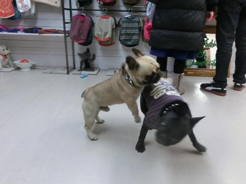 Leuk 君と看板犬のグリコ君