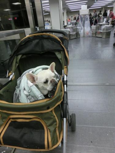 空港でのパオ