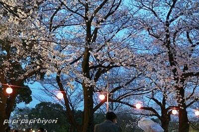 夜桜@お花見