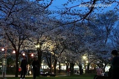 夜桜★お花見