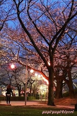 夜桜★2013