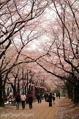 見納め桜★2013