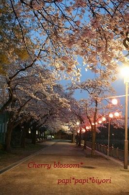 夜の桜★お散歩