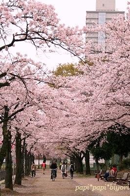 桜・・まだ残ってたぁ