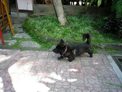 ウブドの犬