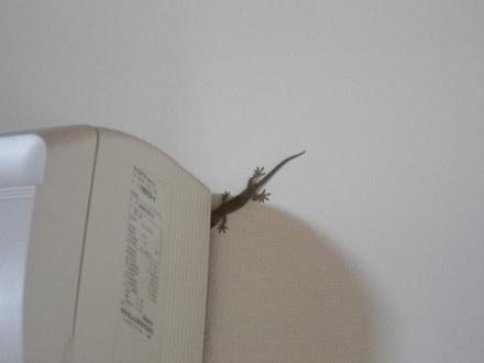 gecko-1.jpg