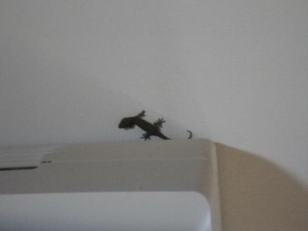 gecko-2.jpg