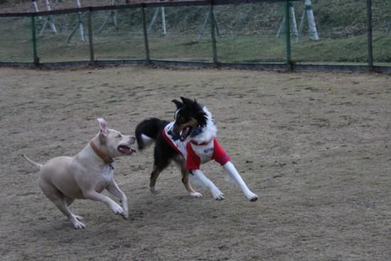 dog run 5