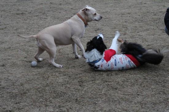 dog run 2