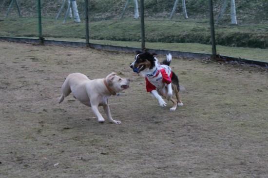 dog run 7