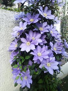 紫130514テッセン