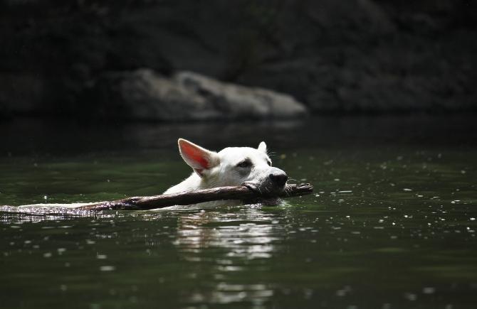 テーオ、遊泳開始