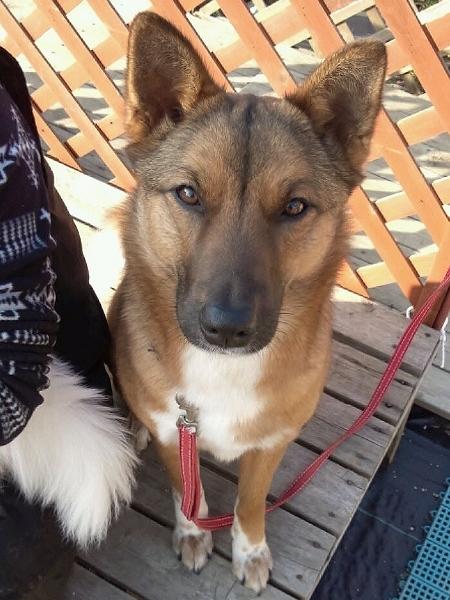 チャオです。美犬です。