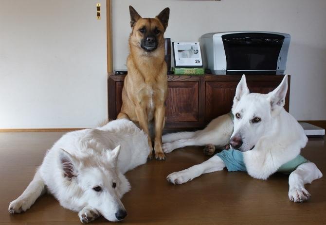 左からルーア、タラ、テーオ