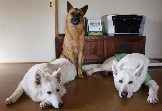 3犬仲良しです