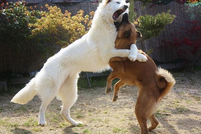 白熊ルーアの抱きかかえ攻撃