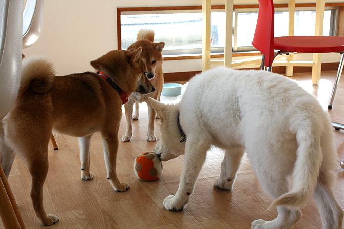 3犬3様の図