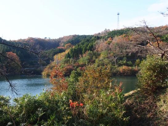 7池と山1129-15